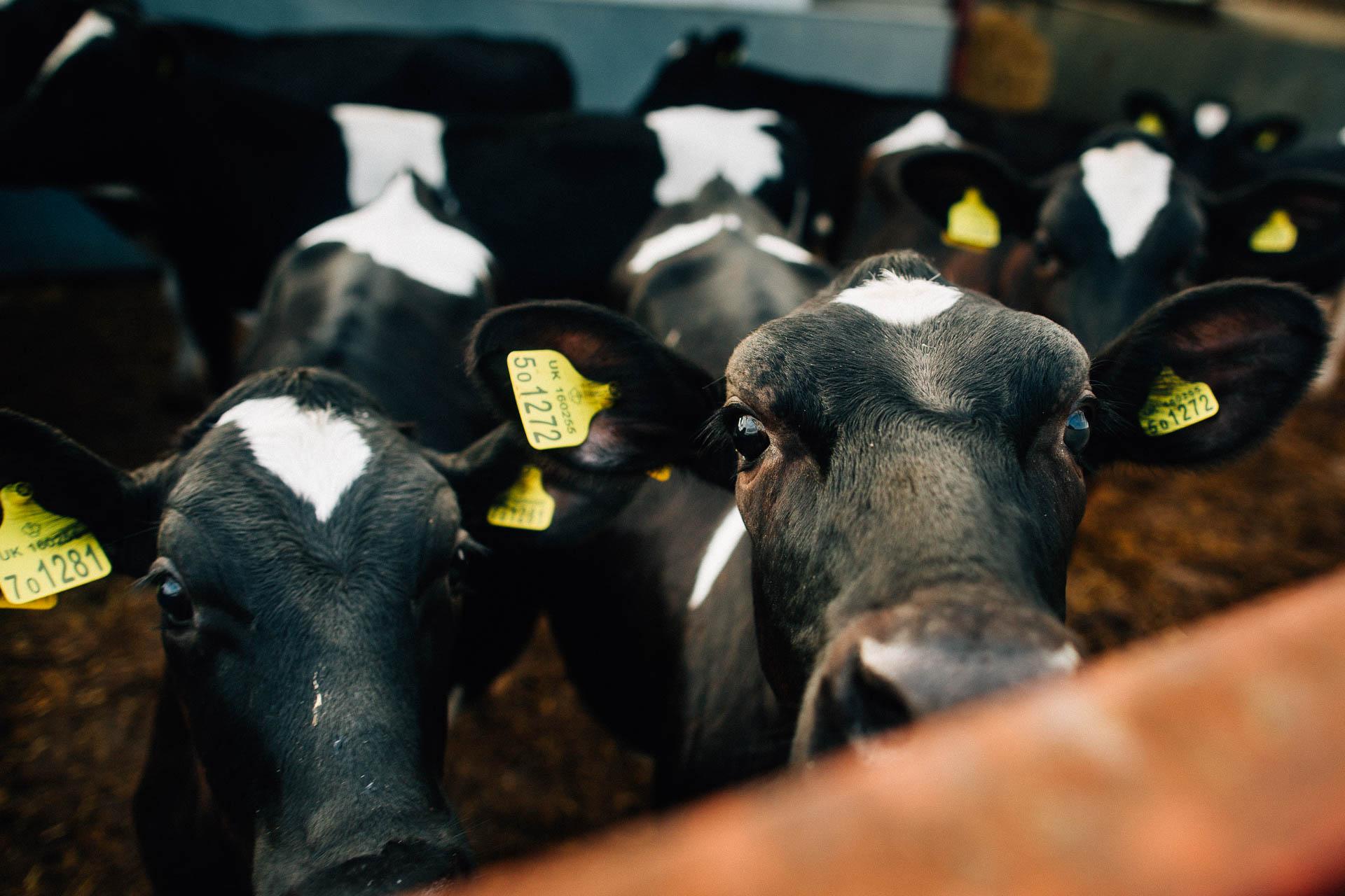 cheshire-rustic-farm-wedding-photography-helen-simon-69